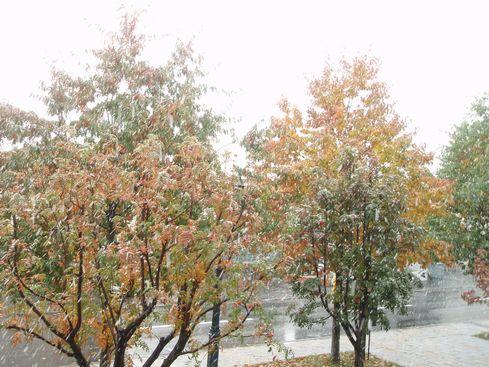 初雪4.jpg